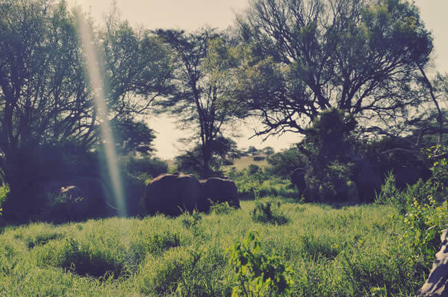 3 Key Dressing Tips For Your Jungle Safari Adventure!